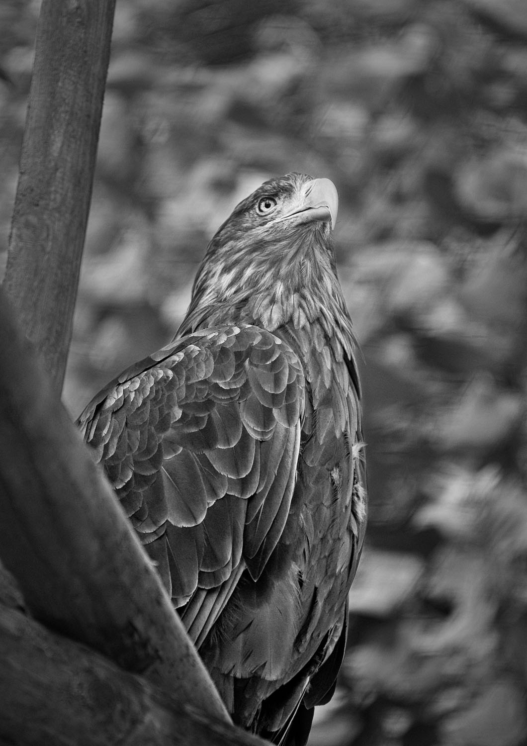 belfast zoo u2019s annual photography competition